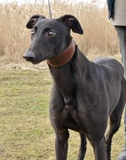 Droopys Hiss